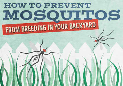 mosquito-tips